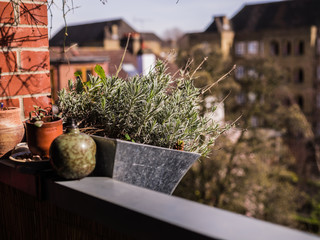 Plants and flowers on balcony