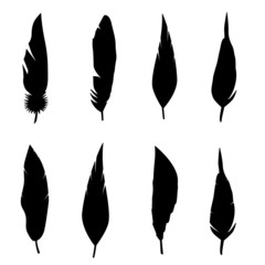 Feather set. Vector illustration isolated over white background