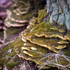 Closeup shot of moss