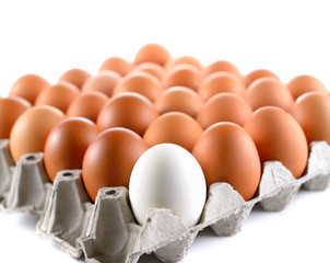 duck egg and chicken eggs in egg tray