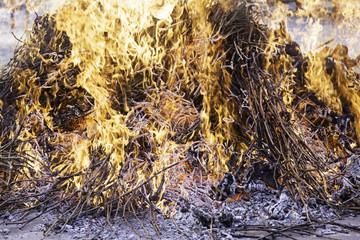 Fire wood embers
