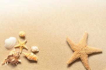 Summer beach. Starfish and seashell on the sand.