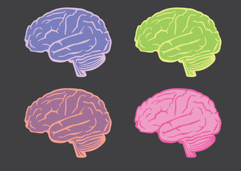 Human Brain Vector Illustration Set
