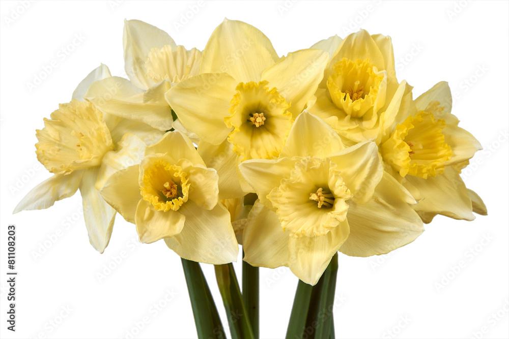 roślina kwiat żółty - powiększenie