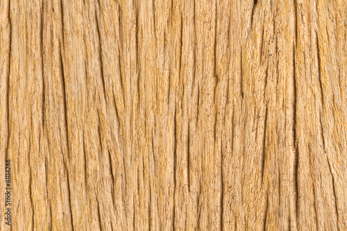 Tuinposter Hout Wood Texture closeup style