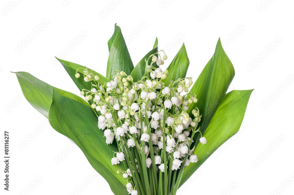 roślina sezon wiosenny maj - powiększenie