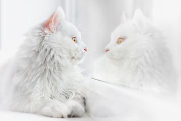 beautiful white cat photo in high key