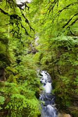 Quellbach im Wald