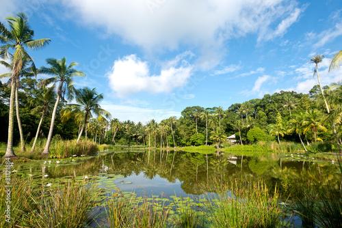 Fotobehang Singapore Pond Scene on Pulau Ubn, Singapore