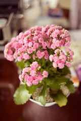 Beautiful flowerpot on table