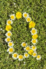 Blüten-Alphabet Buchstabe Q