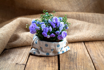 Campanula terry flowers in paper packaging, on sackcloth, wooden