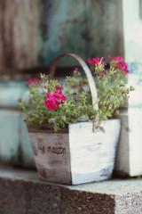Detail of a pink flower, in a wooden flowerpot