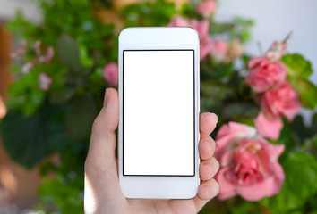 female hand holding a phone with isolated screen