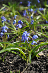 Nice bluebell flowers on the field
