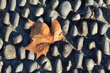 Autumn leaf on the cobble pavement
