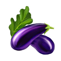 Eggplant  vector illustration  hand drawn  painted