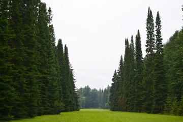 Park in Oranienbaum.