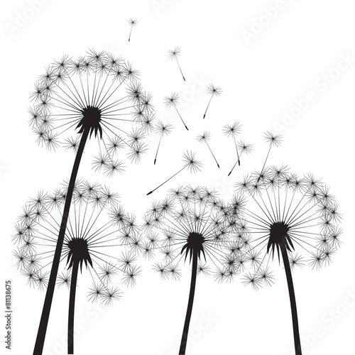 black-vector-dandelions