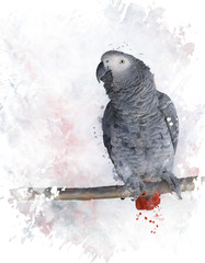 African Grey Parrot Watercolor
