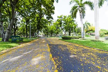 The asphalt road at Thailand