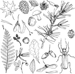 big set of forest objects