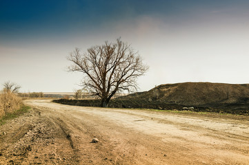 Lonely tree on the road.