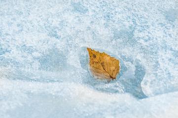 Autumn leaf on the ice