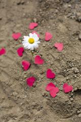 Aşk İle Kesişmek