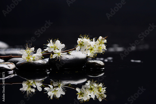 Poster Spa Branch leaf with branch cherry blossom reflection
