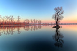Fototapety Lake with tree at sunrise, Slovakia
