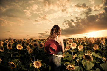 cowgirl at sunflowers farm field sunset