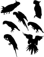 seven black macaw silhouettes collection