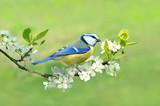 Fototapeta Frühling 331