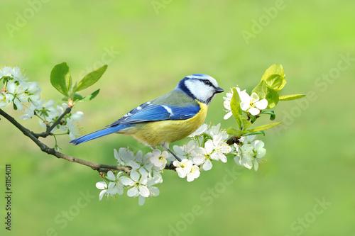Frühling 331 - 81154011
