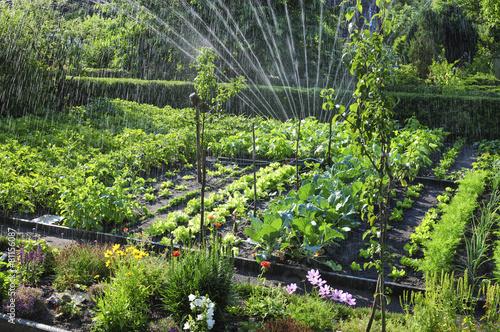 Papiers peints Vegetal Bewässerung im Schrebergarten