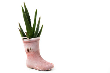 cactus in old rainboot shoe, recycle isolated on white backgroun
