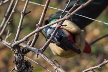 tailler la vigne