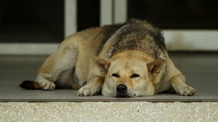 a dog is resting on the floor and opening its eyes