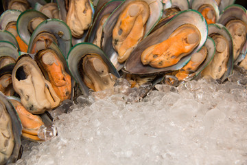 New Zealand mussels and ice close up.
