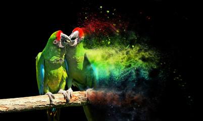 Parrot bird (Severe Macaw)