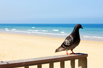 Pigeon resting on fence at the beach