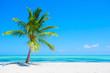 Leinwanddruck Bild - Palm tree on tropical beach