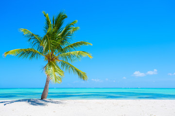 Palm tree on tropical beach