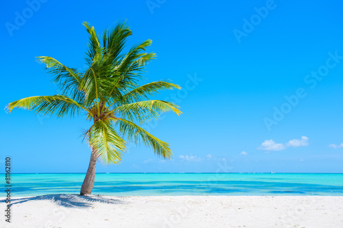 Palm tree on tropical beach Poster