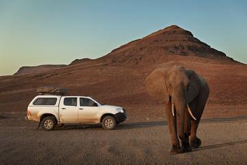 4x4 car near a big African Elephant