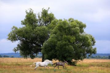 Horses running from the thunderstorm