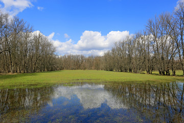 flooded green meadow