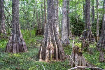 Big Cypress National Preserve Florida USA
