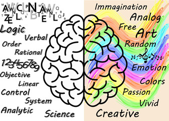 right brain and left brain